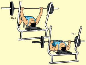 Medium Grip Barbell Bench Press
