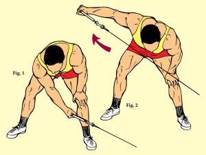 Bent Over Low Pulley Rear Deltoid Raise