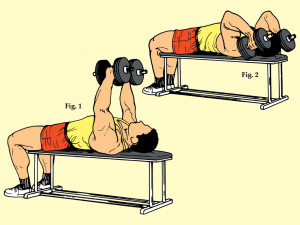 Lying Supine Two Dumbbell Triceps Curl