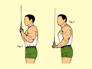 Standing Close Grip Triceps Press Down on Lat Machine