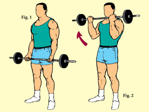 Standing Medium Grip Barbell Curl