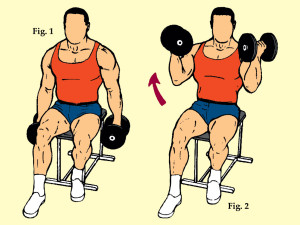 Seated Dumbbell Curl
