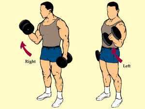 Standing Alternated Dumbbell Curl