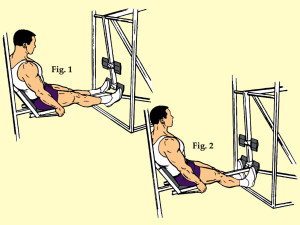 Seated Lower Pad Toe Raise on Universal Type Leg Press Machine
