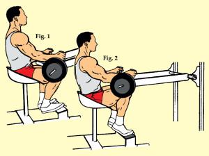 Seated Toe Raise on Seated Calf Machine