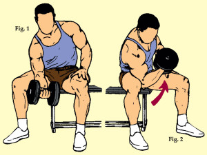 Seated Concentrated Dumbbell Curl