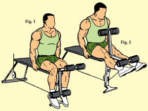Thigh Extension on Leg Extension Machine